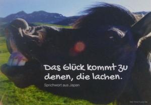 picture_Glueck_im_Beruf_Pferd